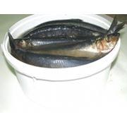 Рыба слабосоленая давно уже стала традиционным продуктом который отличается богатым вкусом и обладает множеством питательных элементов. Наша компания готова предложить вам только самую свежую и качественную слабосоленую рыбу. фото