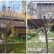 Весенняя обрезка/обработка сада Щёлково фото