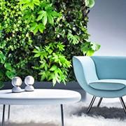 Озеленение, Фитодизайн, Ландшафтный дизайн фото