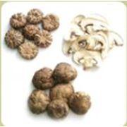Сушёные грибы фото