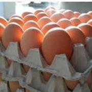Фасовка продуктов питания: яйца куриные фото