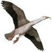 Муляжи птиц и манки фото