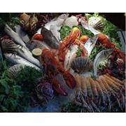 Морские деликатесы фото