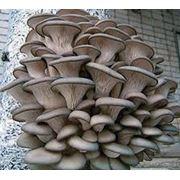 Переработка |выращивание грибов фото