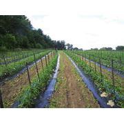 Внесение органических удобрений фото