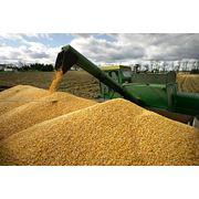 """""""Fabrica presteaza servicii de prelucrare calibrare tratare pastrare si transportare a semintelor si cerealelor. """" фото"""