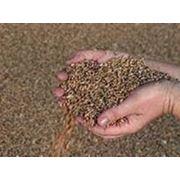 Экспорт зерна и зерновых культур фото