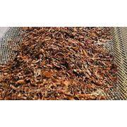 Переработка ориентального табака фото