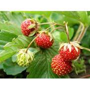 Удобрения для плодовых культур фото