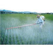 Пестициды в Молдове фото