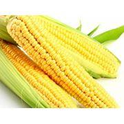 Кукуруза продовольственная на экспорт фото