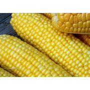 Кукуруза зерно в Молдове фото