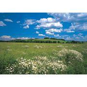 Продажа земли сельскохозяйственного назначения фото