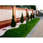 Газоны рулонные газоны луговые газоны спортивные дизайн сада фото