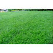 Укладка газона в Кишиневе фото