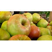 Ящики для яблок фото
