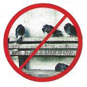 Противоприсадные средства защиты от птиц фото