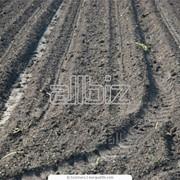 Услуги вспашки. культивация в Одесской области фото