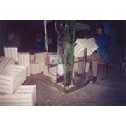 Деревянная тара евростандарта фото