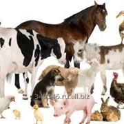 Премиксы для птицы, свиней, пушных зверей фото
