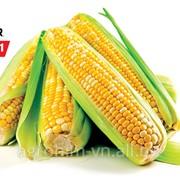 Насіння кукурудзи Піонер PR37N01* Пончо , міш фото