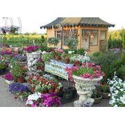 Гибискус разных расцветков фото