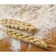 Мука из твердых сортов пшеницы в Молдове фото
