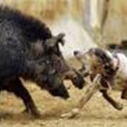 Разведение дичи в охотничьих хозяйствах фото
