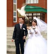 Выпуск голубей в Нефтекамске, Николо-Березовке на свадьбах и других торжествах. фото