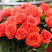 Розы в Казахстане фото