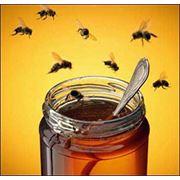 Акациевый (белоакациевый) мед фото