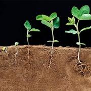 Регулятор роста растений Агростимулин фото
