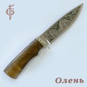 Нож Олень (95х18), орех. Арт. 8011 фото