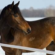 Лошади в Татарстане фото