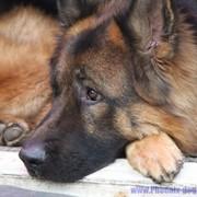 Дрессироква собак фото