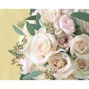 Свадебный распорядитель. Организация свадьбы, помощь в организации свадьбы в Минске фото