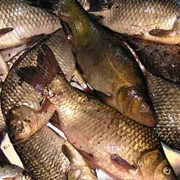 Сохранность рыбы фото