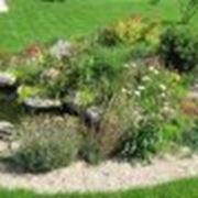 Озеленение от PAM - IMPEX SRL фото