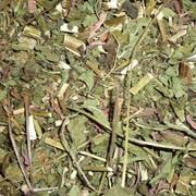 Ехінацеї трава фото