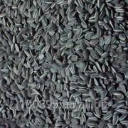 Семена подсолнечника Дунай фото