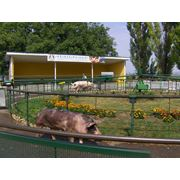 Свинина-полутуши в Молдове фото