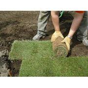 Укладка газона в Молдове недорого! фото