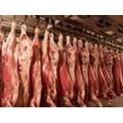свинина говядина баранина крольчатина конина фото