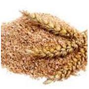 О́труби — побочный продукт мукомольного производства представляет собой твердую оболочку зерна. Не следует путать с мякиной. фото
