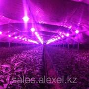 Фитолампа светодиодная для рассады и цветов 10 Вт фото