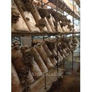 Субстратные грибные блоки зарощенные фото