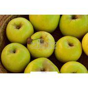 Яблоки от производителя фото