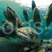 Станции озонирования для рыбных хозяйств фото