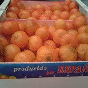 Мандарин, оптовые поставки мандарина. фото