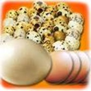 Яйца гусиные, утиные, перепелиные фото